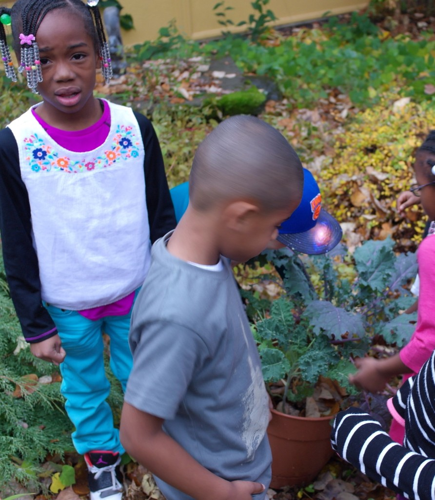 Picking Kale in RCN's Sensory Garden with school age children
